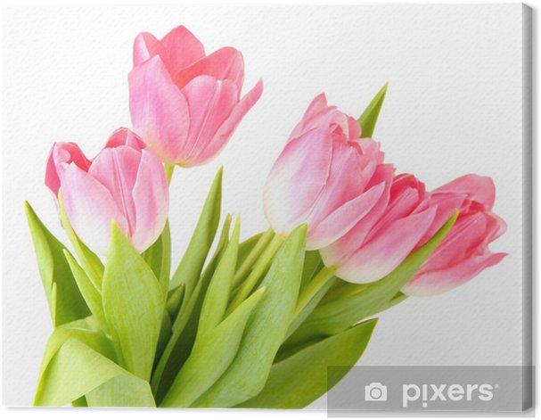 Cuadro en Lienzo Tulipanes de color rosa aisladas en blanco - Flores