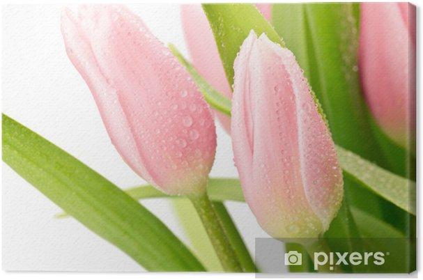 Cuadro en Lienzo Tulipany - Flores