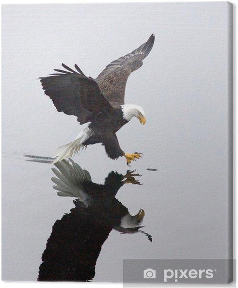 Cuadro en Lienzo Un águila calva agarra un pez .. • Pixers ...