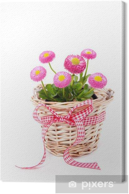 Cuadro en Lienzo Una cesta de mimbre con las margaritas del Bellis aislado más de blanco - Flores