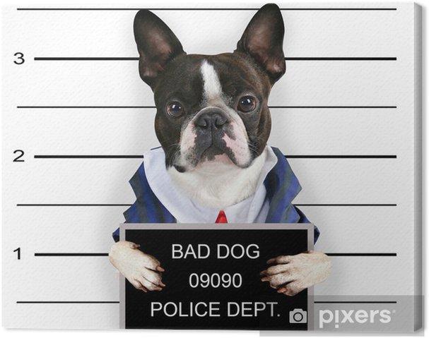 Cuadro en Lienzo Una ficha policial de un perro malo - Mamíferos