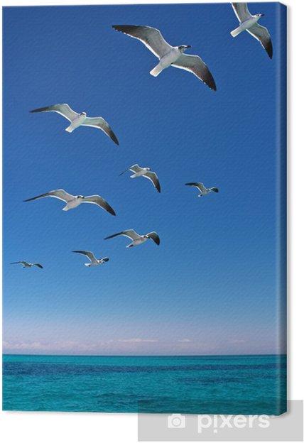 Cuadro en Lienzo Varias gaviotas volando sobre un mar azul - Aves