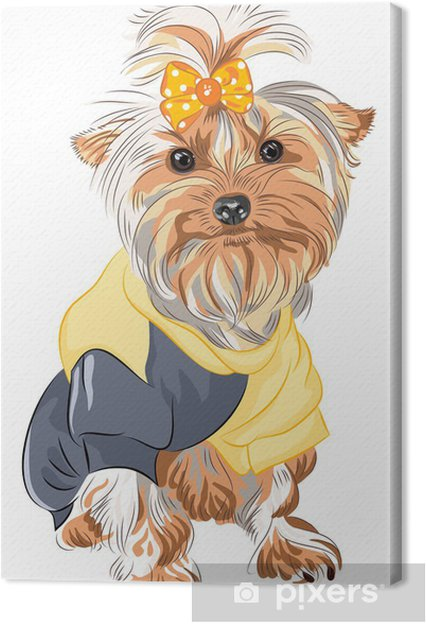 Cuadro En Lienzo Vector Pedigrí Perro Yorkshire Terrier Sentado