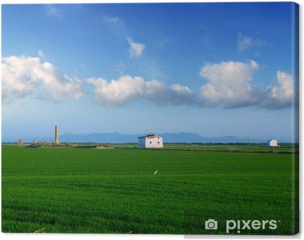 Cuadro en Lienzo Verdes campos de arroz en El Saler en Valencia, España - Agricultura