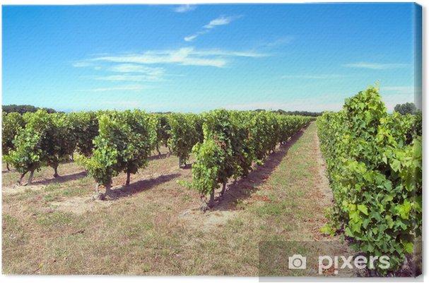 Cuadro en Lienzo Vines isla Oleron - Plantas
