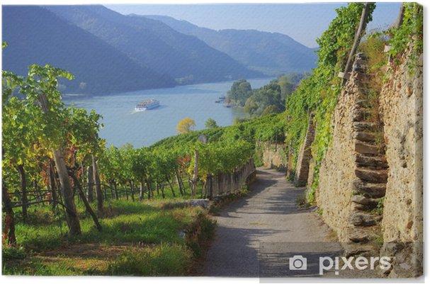 Cuadro en Lienzo Wachau Weinberg - Wachau viñedo 15 - Temas
