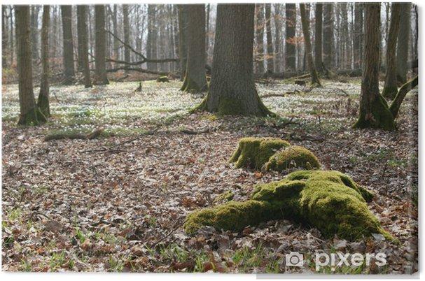 Cuadro en Lienzo Waldboden - Deportes de exterior
