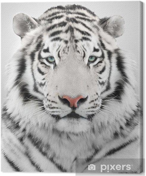 Cuadro en Lienzo White tiger - Temas