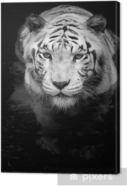 Cuadro en Lienzo White tiger - Estilos
