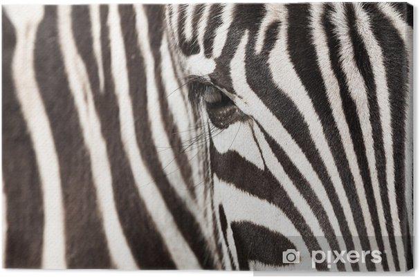 Cuadro en Lienzo Zebra - detalle - Estilos