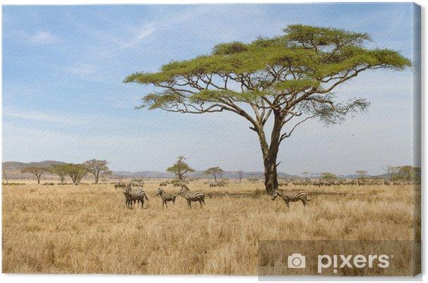 Cuadro en Lienzo Zebra pastoreo en el Serengeti - Temas