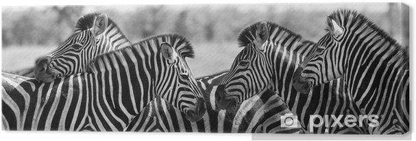 Cuadro en Lienzo Zebra rebaño en la foto en blanco y negro con las pistas junto - Temas