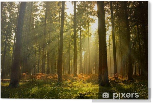 Cuadro en Metacrilato Hermoso bosque - Estilos