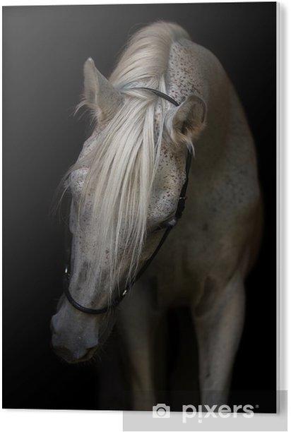 Cuadro en PVC Retrato de un caballo árabe en el fondo blanco. - Animales