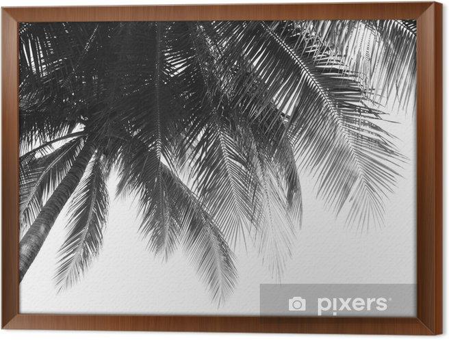 Cuadro Enmarcado Hermosa hoja de palmas sobre fondo blanco - Plantas y flores