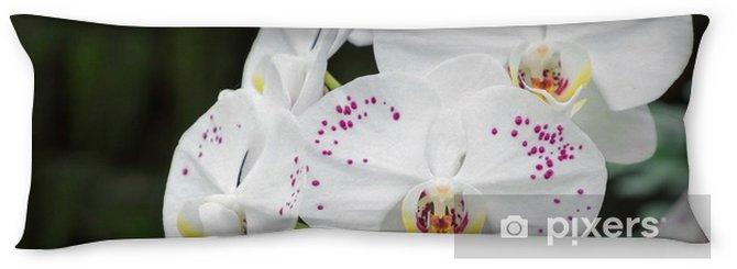Cuscino oblungo Fiore dell'orchidea nel giardino di orchidee in inverno o in primavera il giorno per la bellezza cartolina e concetto di idea di agricoltura. orchidea phalaenopsis o orchidea falena. - Piante & Fiori