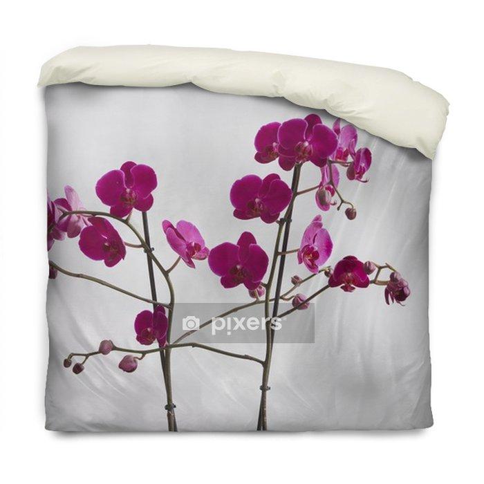 Dekbedovertrek Witte achtergrond mooie orchidee geïsoleerd - Bloemen en Planten