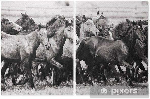 Díptico Una manada de caballos jóvenes - Mamíferos
