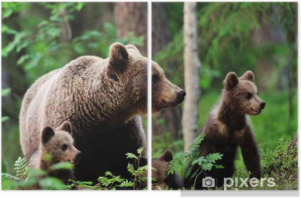 Brown bear with cubs in forest Diptych - Themes