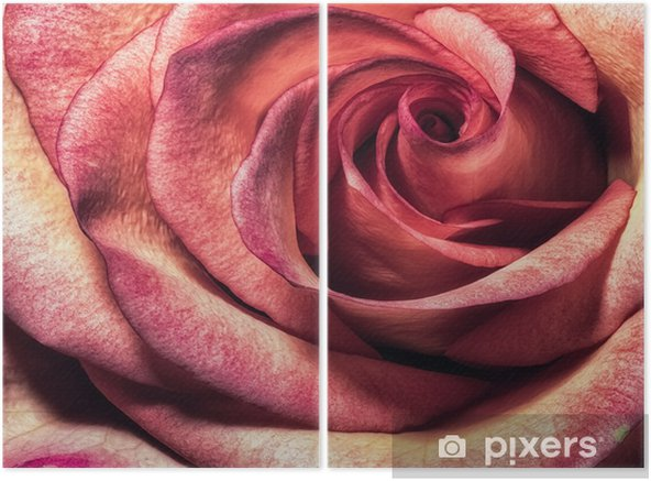 Fine art floral color macro flower portrait of a the inner of a single isolated colorful pink orange pink blooming rose blossom with detailed texture in vintage painting style Diptych - Plants and Flowers