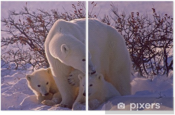 Polar bears in Canadian Arctic Diptych - Themes