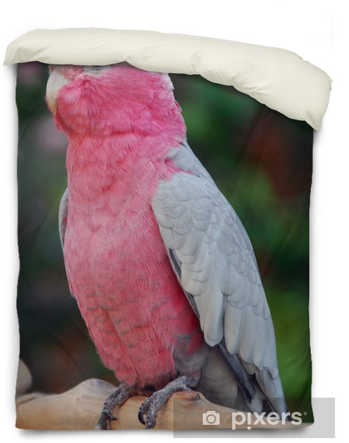Galah Rose Breasted Cockatoo Parrot Bird Duvet Cover Pixers We Live To Change,Slow Cooker Boston Butt Bbq