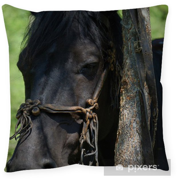 Black Horse With A Rein Floor Pillow • Pixers® • We Live