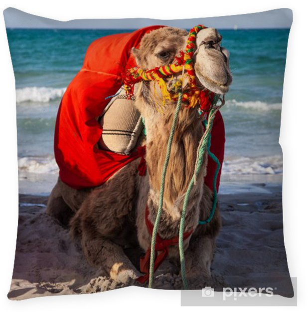Living Room Art Cafe Social Club Kadıköy: Camel Sitting Over Sea Background Floor Pillow • Pixers