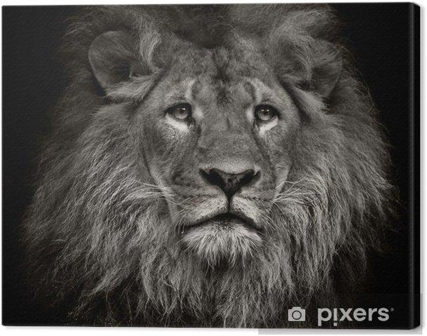 Arrogante løve Fotolærred -