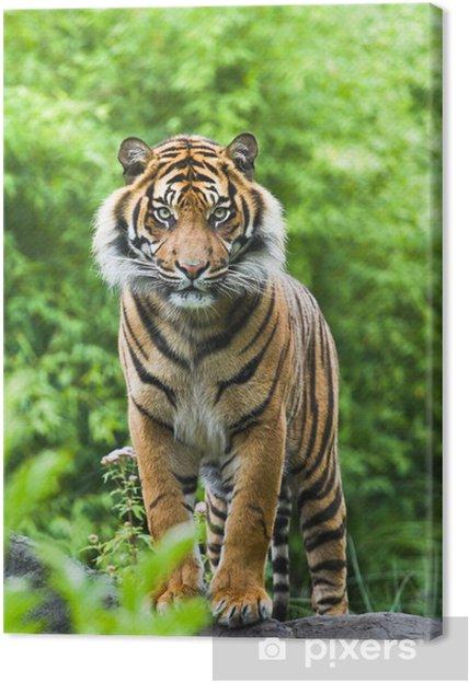 Asiatisk eller Bengal tiger med bambus buske baggrund Fotolærred -
