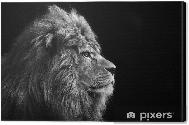 Bedøvelse ansigtsportræt af mand løve på sort baggrund i bla Fotolærred -