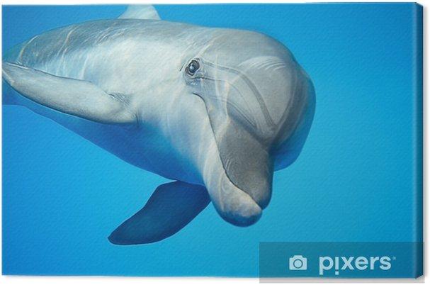 Delfin under vand Fotolærred -