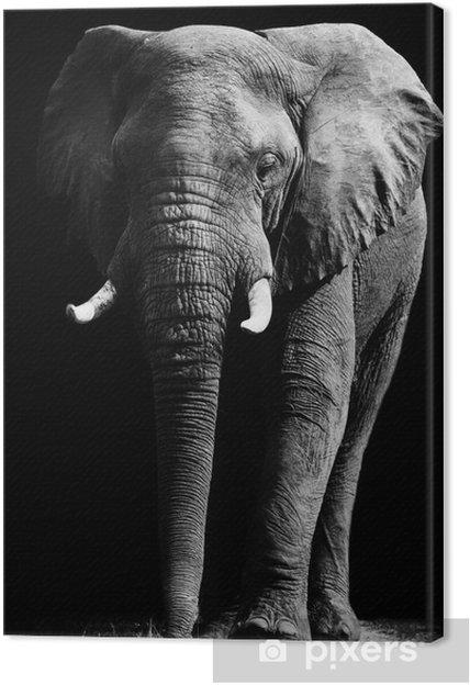 Elefant isoleret på sort baggrund Fotolærred -