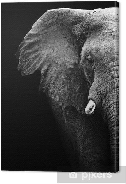 Elephant nærbillede Fotolærred -