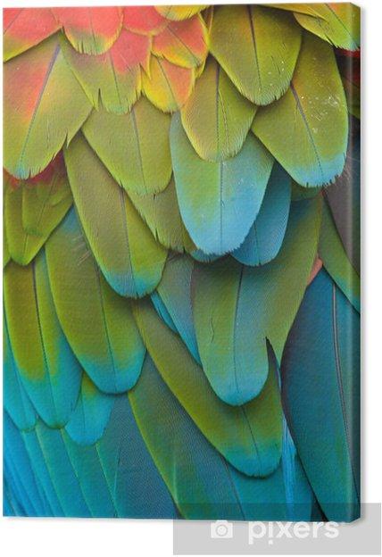 Farverig Macaw Plumage Fotolærred -