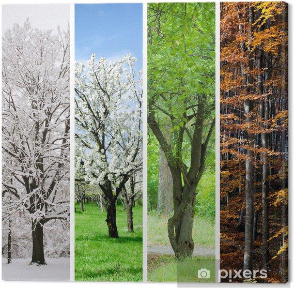a32ec7e6 Fire årstider collage: Vinter, forår, sommer, efterår Fotolærred ...