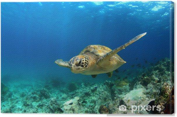 Grøn havskildpadde svømning under vandet Fotolærred - Andre Andre