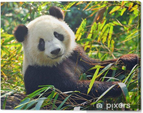 Hungrig kæmpe panda bærer at spise bambus Fotolærred -