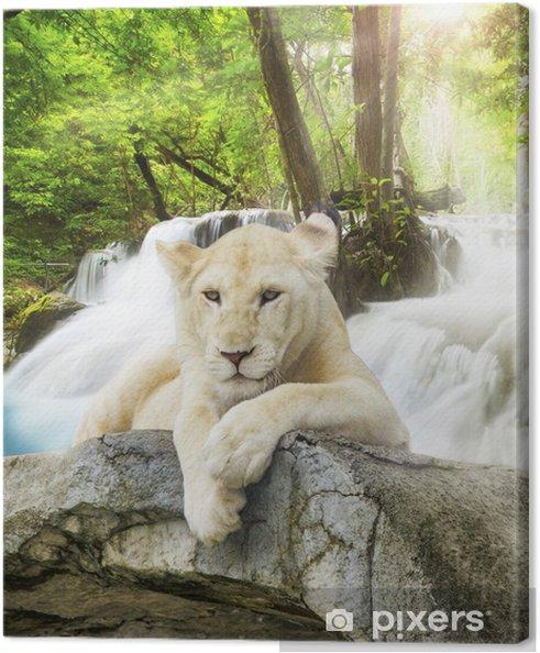 Hvid løve Fotolærred -