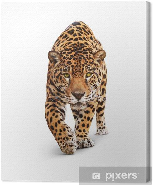 Jaguar - Dyr forfra, isoleret på hvidt, skygge Fotolærred - Vægklistermærke