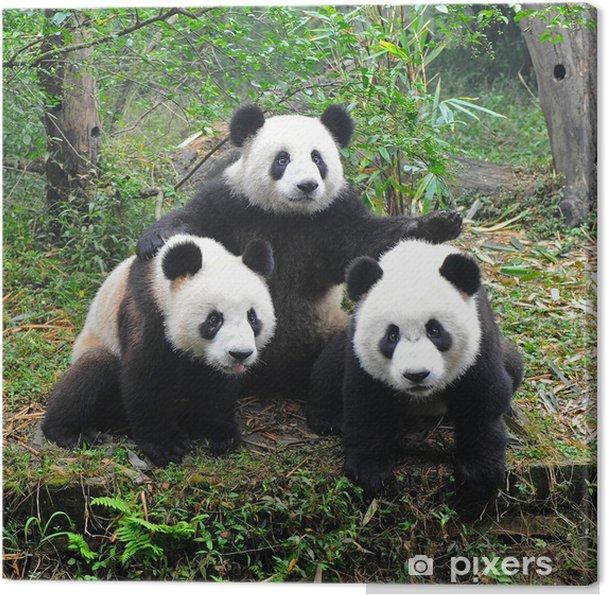 Kæmpe panda bjørn udgør for kamera Fotolærred -
