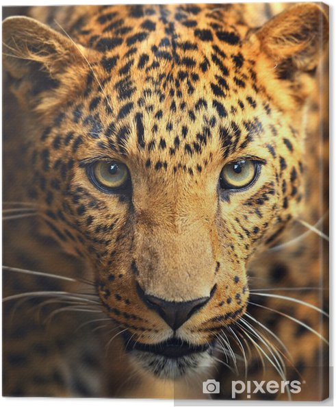 Leopard portræt Fotolærred -