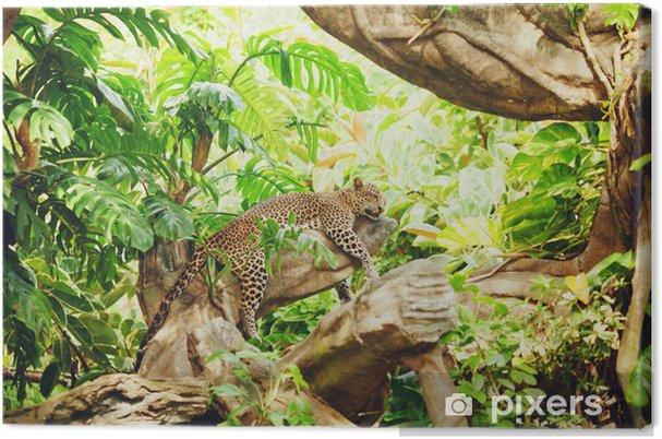 Liggende (sovende) leopard på trægren Fotolærred -