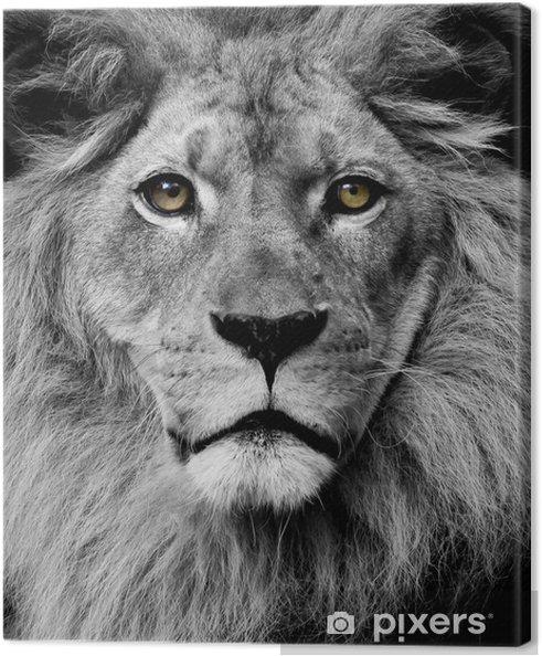 Lion øjne Fotolærred -