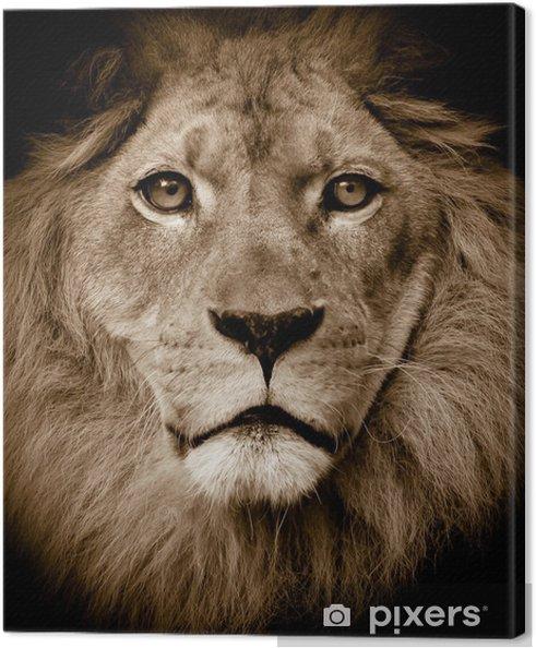Lion portræt Fotolærred -