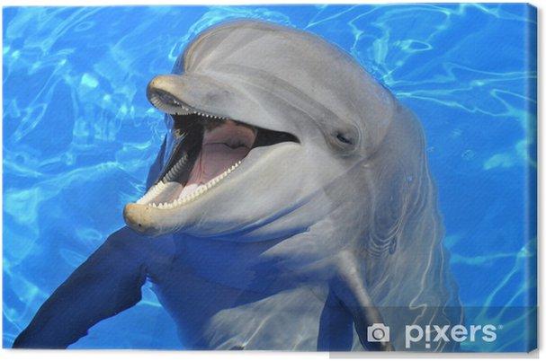 Portrait d'un dauphin la bouche ouverte Fotolærred -