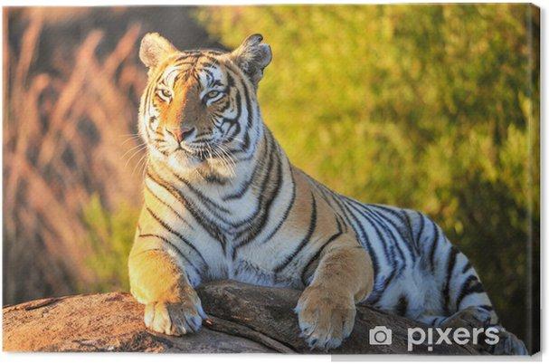 Portræt af en Tiger Fotolærred -