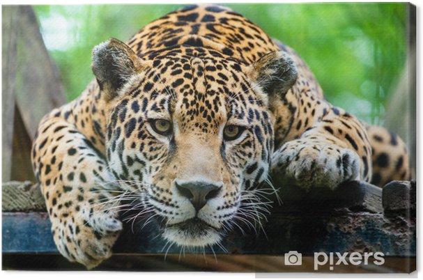Sydamerikanske jaguar Fotolærred -