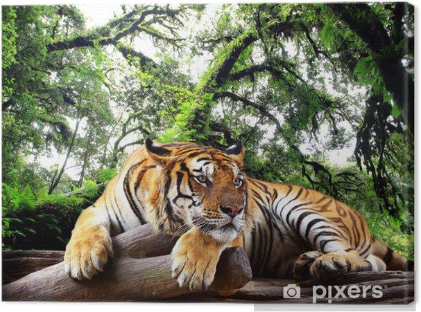 Tiger ser noget på klippen i den tropiske evergreen skov Fotolærred -