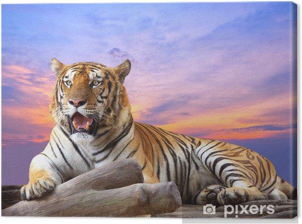 Tiger ser noget på klippen med smukke himmel ved solnedgang Fotolærred -